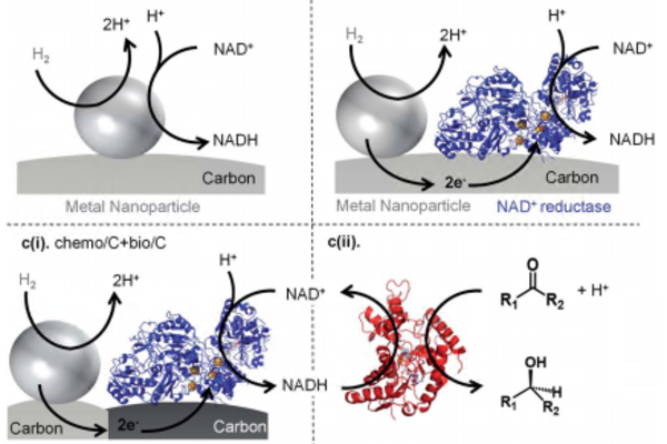 guide to h2 driven nadh generation using carbon supported metal nanoparticles