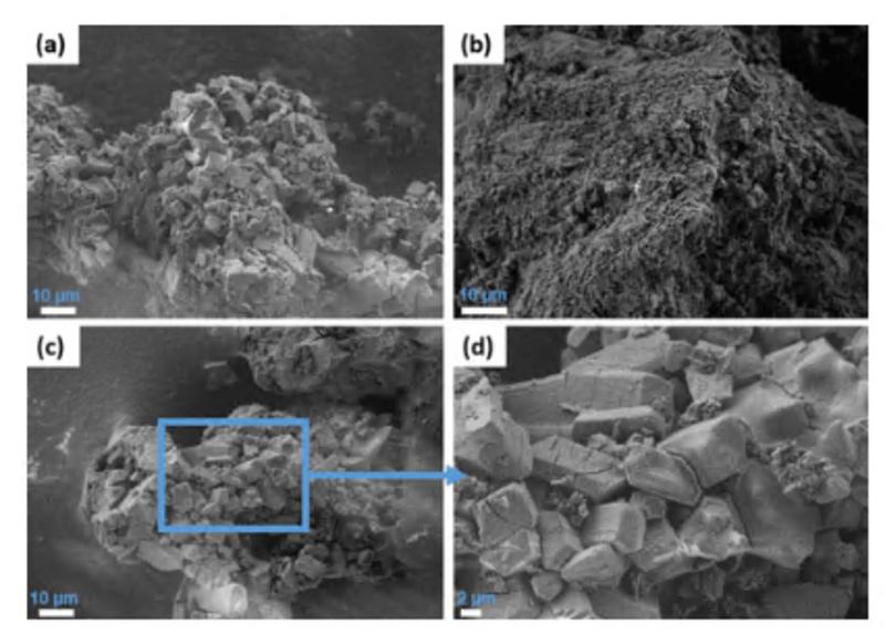 SEM sample micrographs